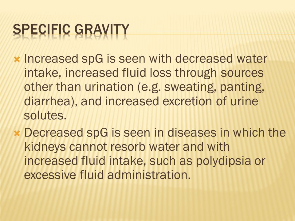  Increased spG is seen with decreased water intake, increased fluid loss through sources other than urination (e.g. sweating, panting, diarrhea), and