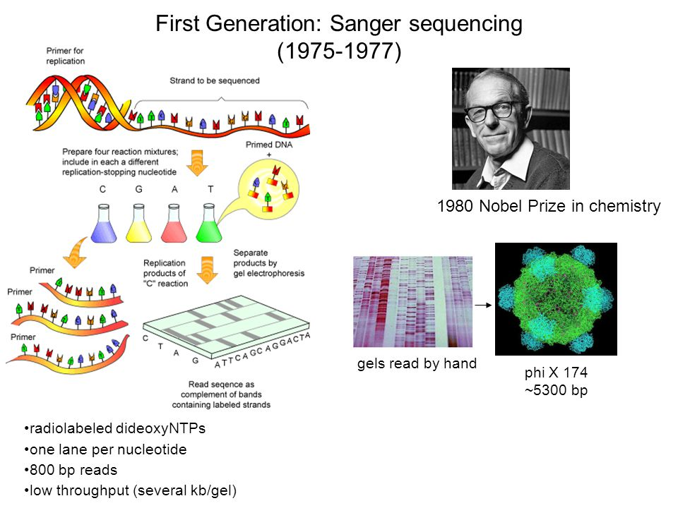 Second-generation sequencing: Massively parallel sequencing of millions of template Illumina Ion Torrent-Proton