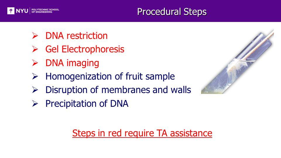Procedural Steps  DNA restriction  Gel Electrophoresis  DNA imaging  Homogenization of fruit sample  Disruption of membranes and walls  Precipitation of DNA Steps in red require TA assistance