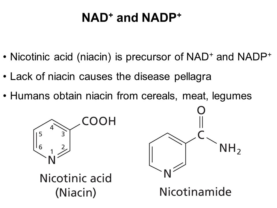 NAD + and NADP + Nicotinic acid (niacin) is precursor of NAD + and NADP + Lack of niacin causes the disease pellagra Humans obtain niacin from cereals, meat, legumes