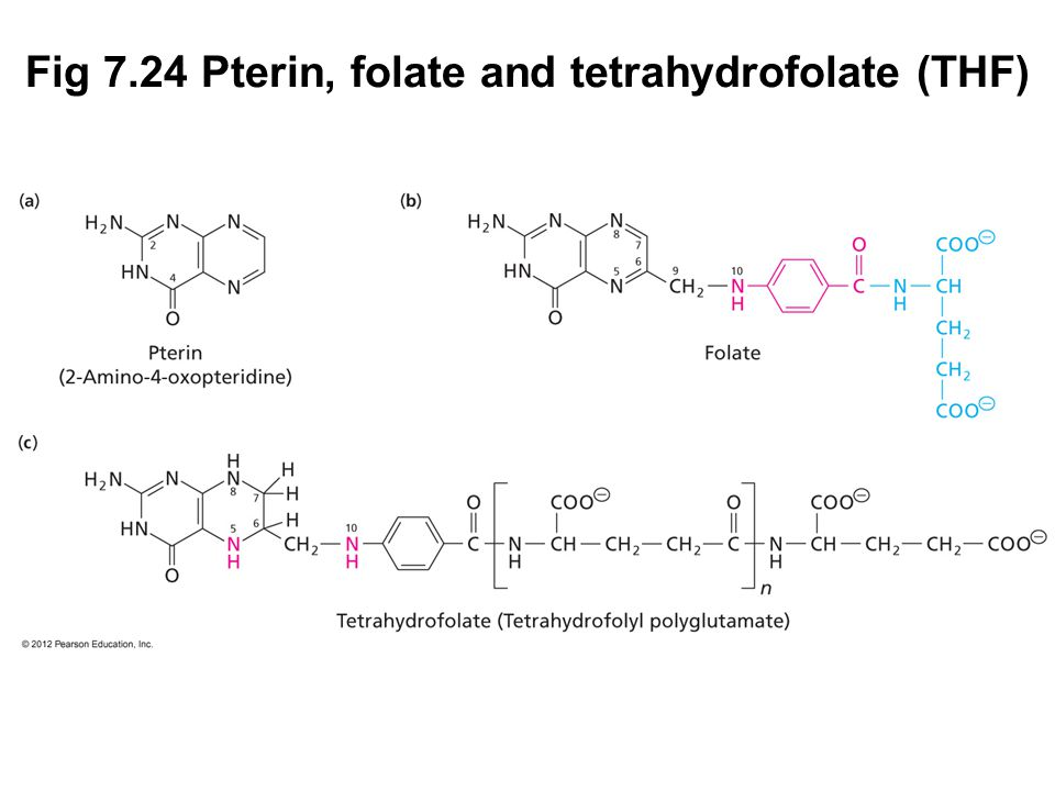 Prentice Hall c2002Chapter 726 Fig 7.24 Pterin, folate and tetrahydrofolate (THF)