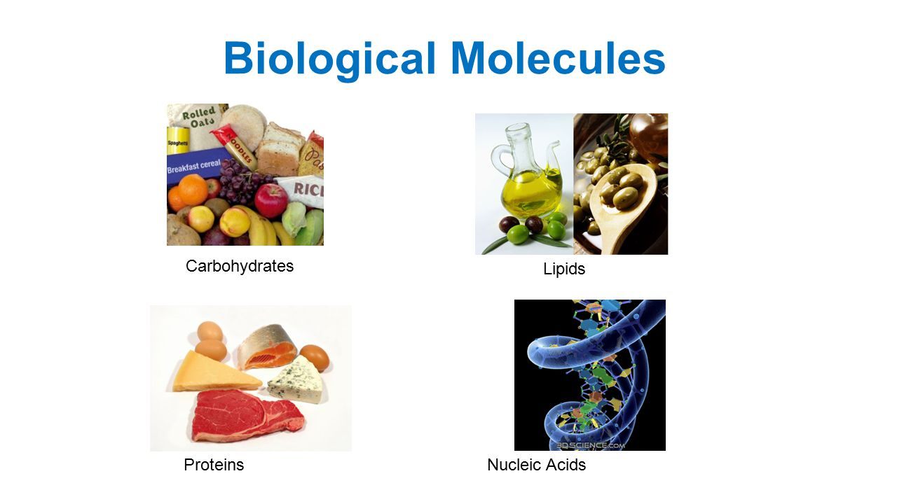 Biological Molecules Lipids ProteinsNucleic Acids Carbohydrates