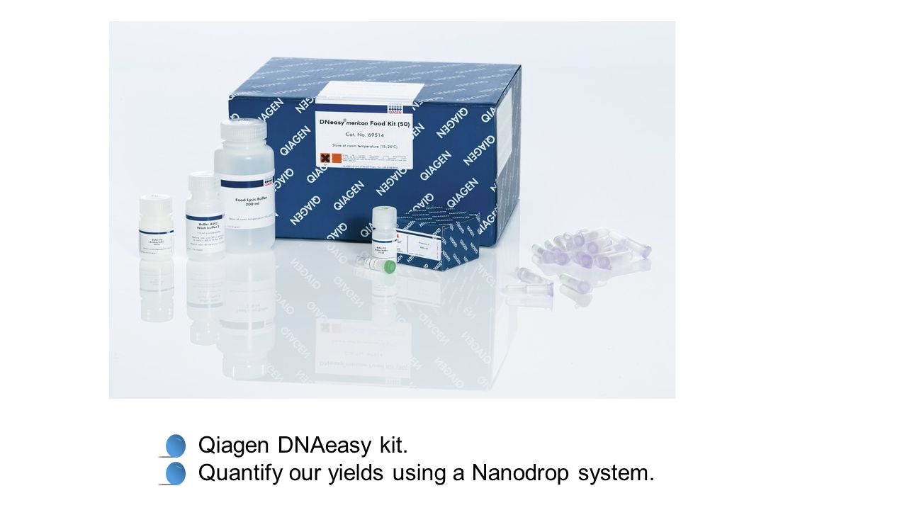 Qiagen DNAeasy kit. Quantify our yields using a Nanodrop system.