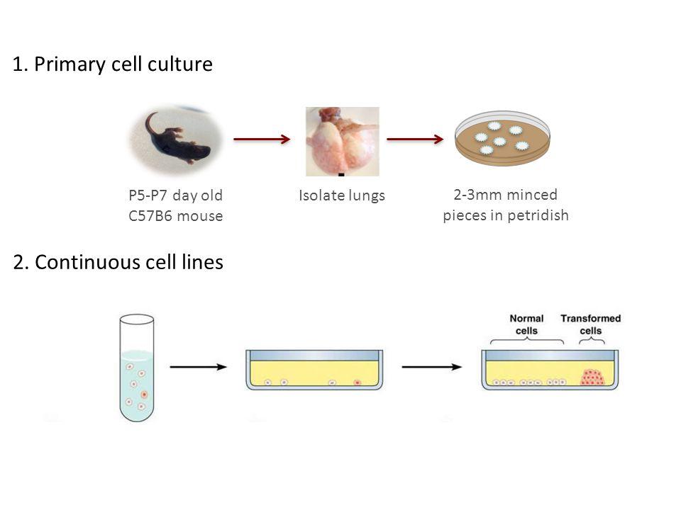 Contamination Biological contamination: -Cross contamination -Bacteria, yeast, viruses, and mycoplasma Chemical contamination