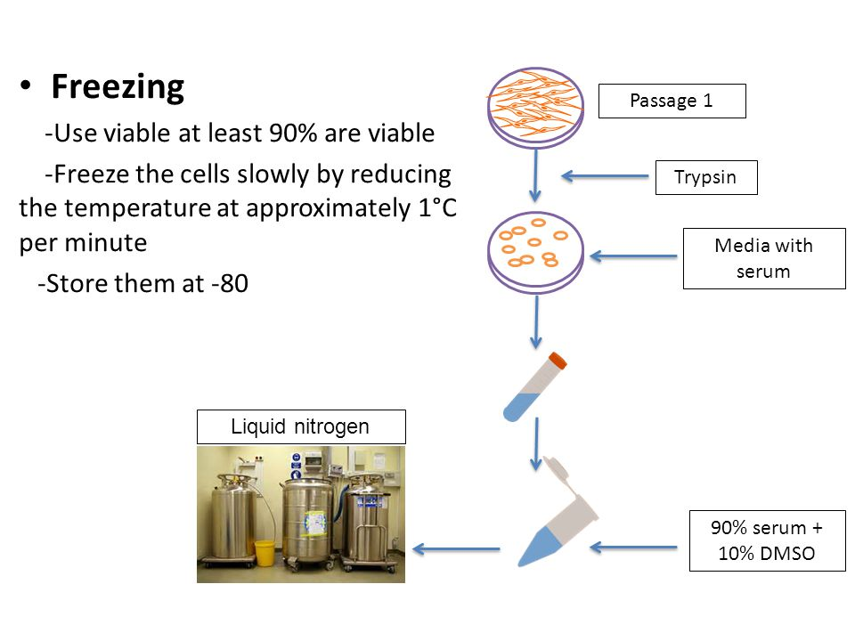 Electroporation transfection (mechanical) A mechanical transfection method that uses an electrical pulse to create temporary pores in cell membranes.