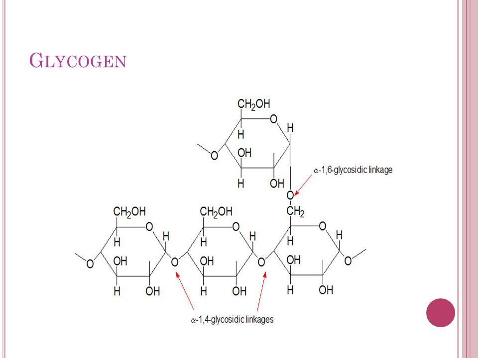 G LYCOGEN