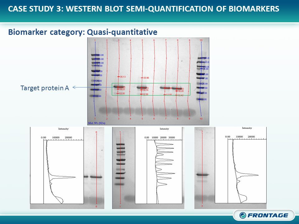 CORPORATE OVERVIEW CASE STUDY 3: WESTERN BLOT SEMI-QUANTIFICATION OF BIOMARKERS Biomarker category: Quasi-quantitative Target protein A