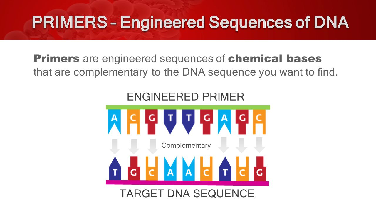 Primers are engineered sequences of chemical bases that are complementary to the DNA sequence you want to find.
