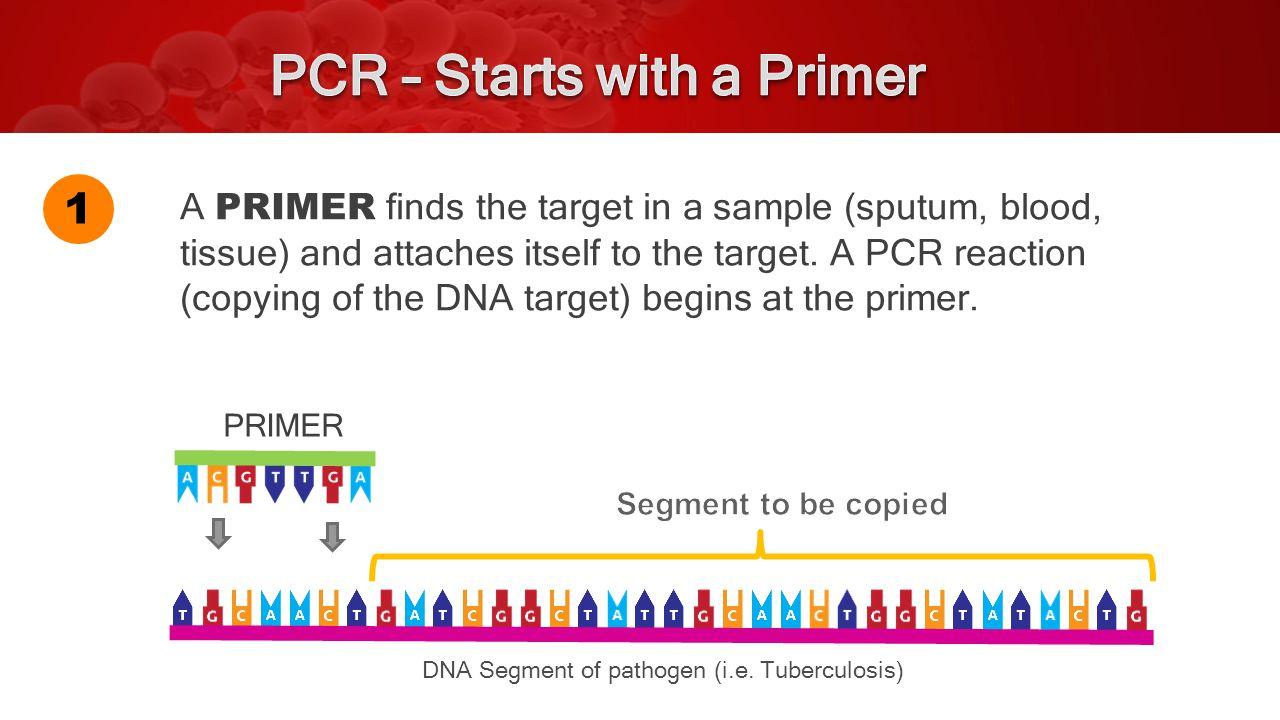 PRIMER DNA Segment of pathogen (i.e.
