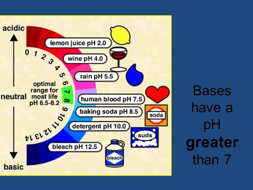 Bases have a pH greater than 7