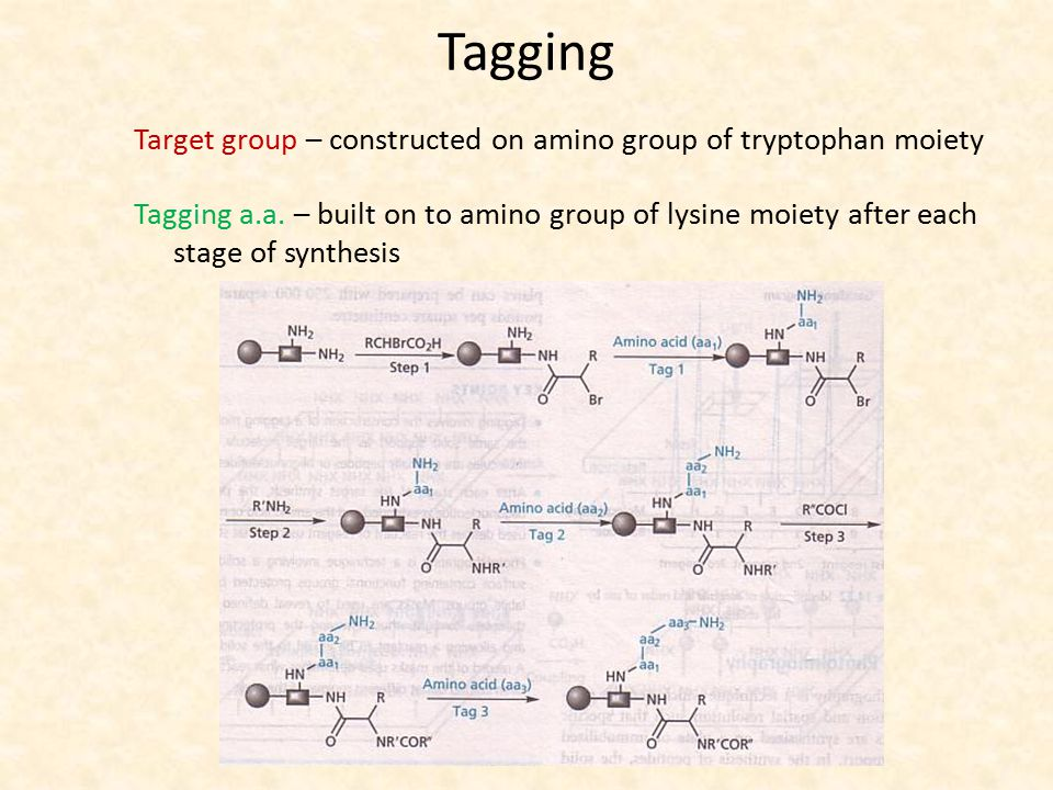 Tagging Target group – constructed on amino group of tryptophan moiety Tagging a.a. – built on to amino group of lysine moiety after each stage of syn