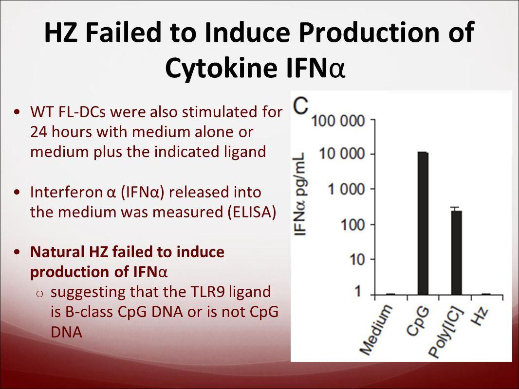 HZ Failed to Induce Production of Cytokine IFNα WT FL-DCs were also stimulated for 24 hours with medium alone or medium plus the indicated ligand Interferon α (IFNα) released into the medium was measured (ELISA) Natural HZ failed to induce production of IFNα o suggesting that the TLR9 ligand is B-class CpG DNA or is not CpG DNA