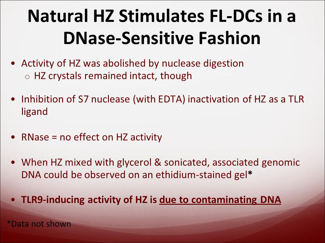 Natural HZ Stimulates FL-DCs in a DNase-Sensitive Fashion Activity of HZ was abolished by nuclease digestion o HZ crystals remained intact, though Inhibition of S7 nuclease (with EDTA) inactivation of HZ as a TLR ligand RNase = no effect on HZ activity When HZ mixed with glycerol & sonicated, associated genomic DNA could be observed on an ethidium-stained gel* TLR9-inducing activity of HZ is due to contaminating DNA *Data not shown