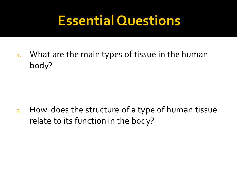 1. What are the main types of tissue in the human body? 2. How does the structure of a type of human tissue relate to its function in the body?