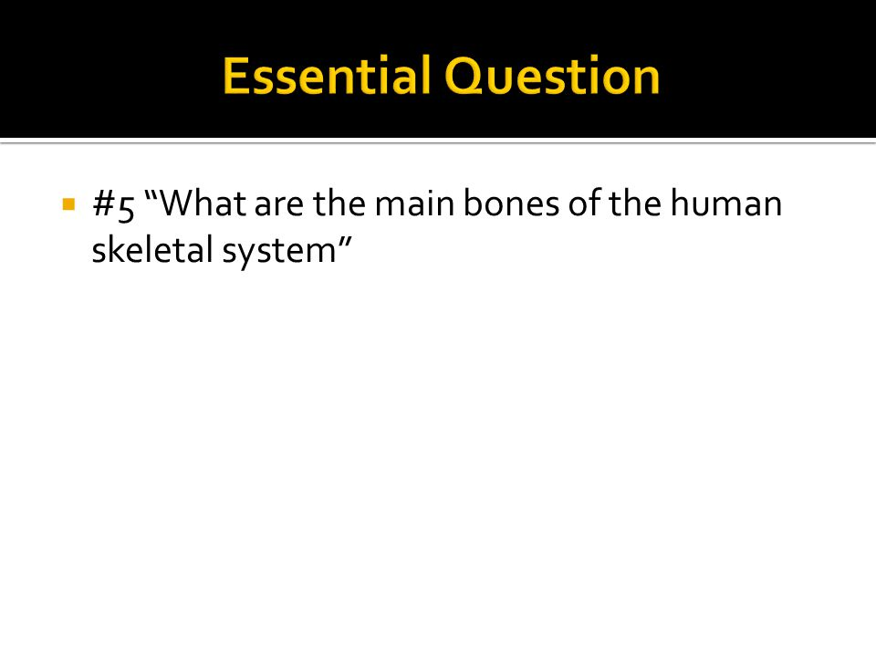 """ #5 """"What are the main bones of the human skeletal system"""""""