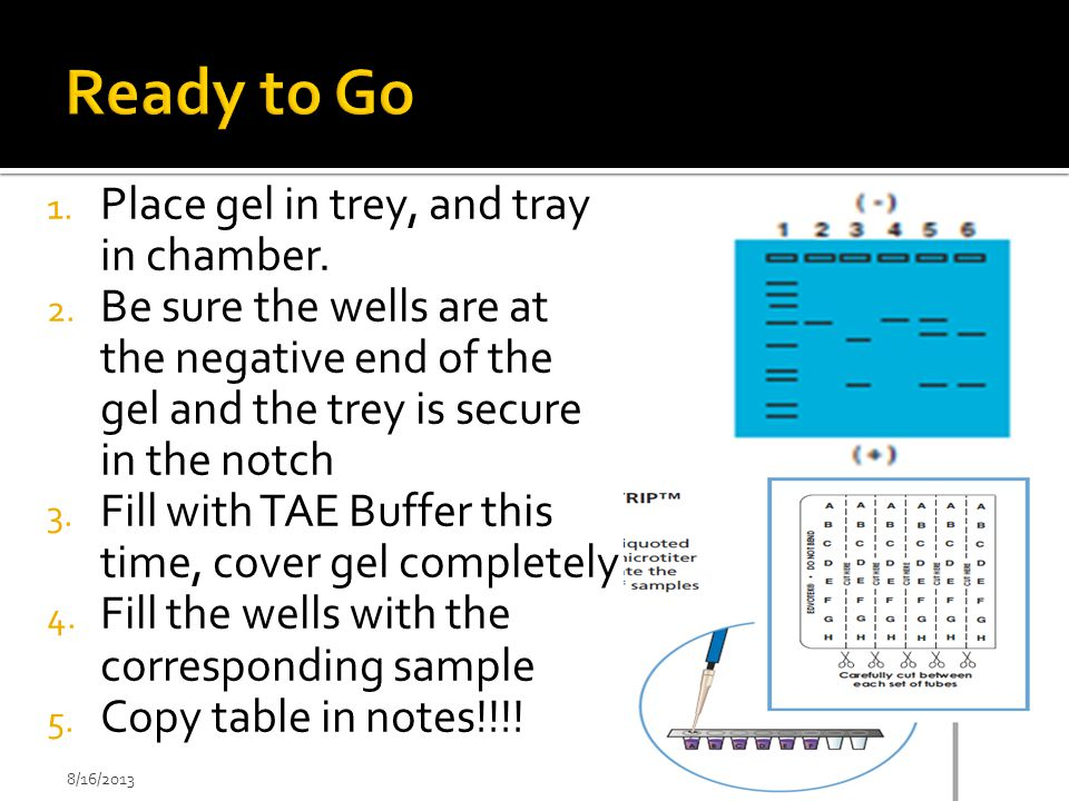 1. Place gel in trey, and tray in chamber. 2. Be sure the wells are at the negative end of the gel and the trey is secure in the notch 3. Fill with TA
