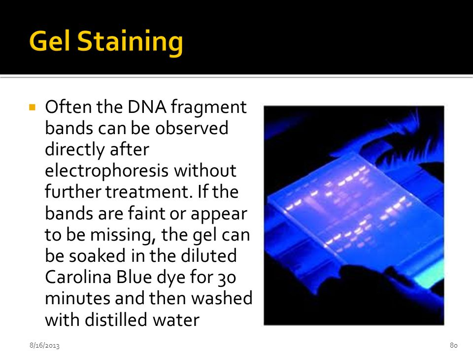  Often the DNA fragment bands can be observed directly after electrophoresis without further treatment. If the bands are faint or appear to be missin