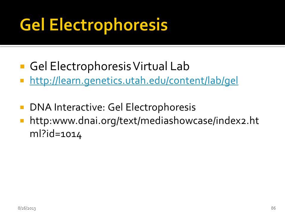  Gel Electrophoresis Virtual Lab  http://learn.genetics.utah.edu/content/lab/gel http://learn.genetics.utah.edu/content/lab/gel  DNA Interactive: G