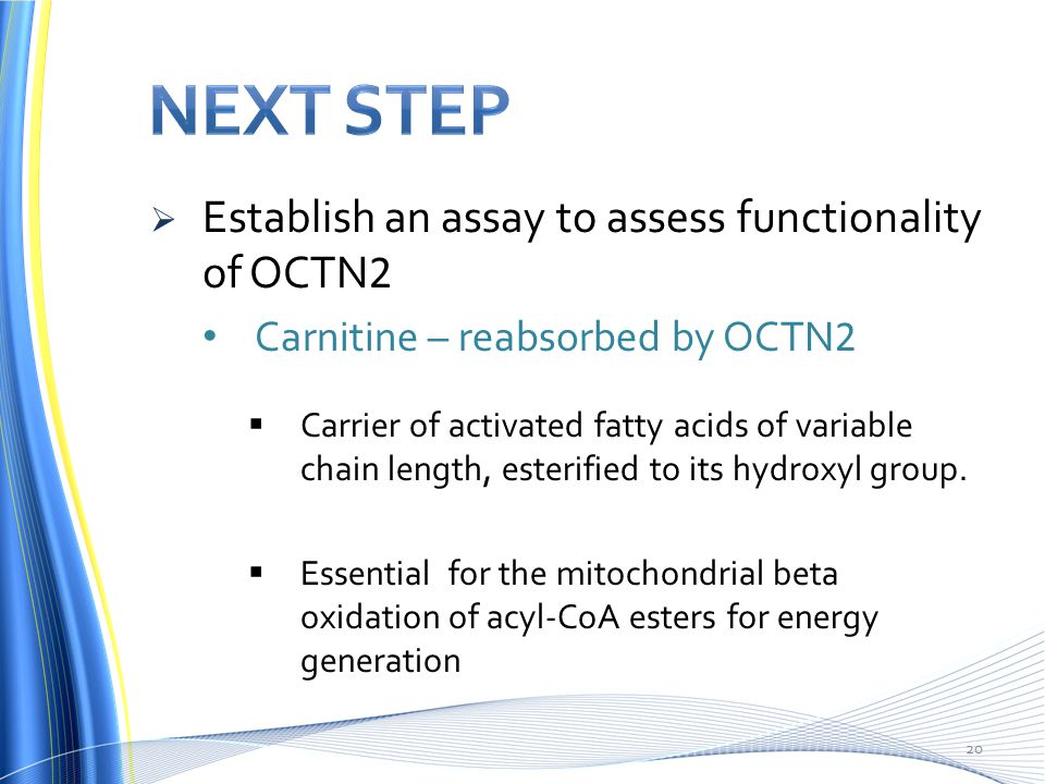  Establish an assay to assess functionality of OCTN 2 Carnitine – reabsorbed by OCTN 2  Carrier of activated fatty acids of variable chain length, esterified to its hydroxyl group.