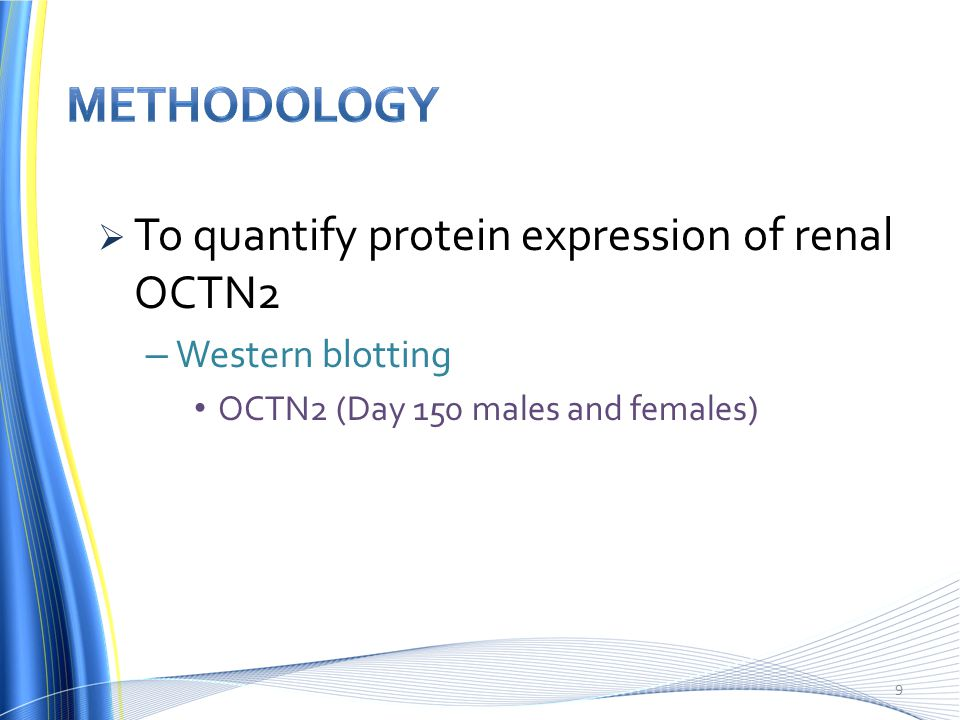  To quantify protein expression of renal OCTN2 – Western blotting OCTN2 (Day 150 males and females) 9