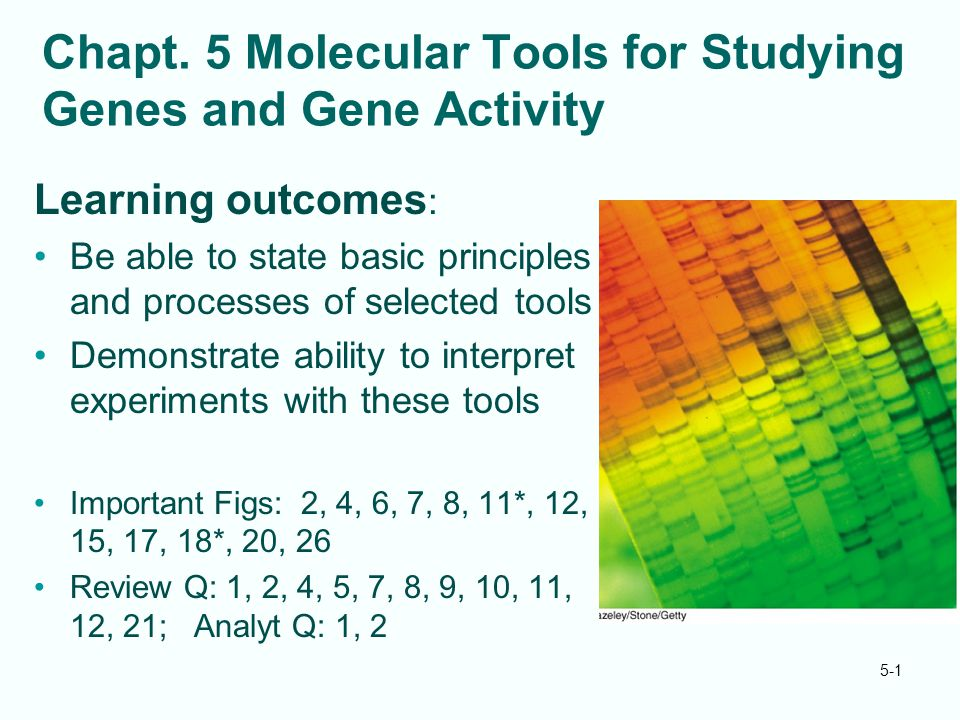 Chapt. 5 Molecular Tools for Studying Genes and Gene Activity Learning outcomes : Be able to state basic principles and processes of selected tools De