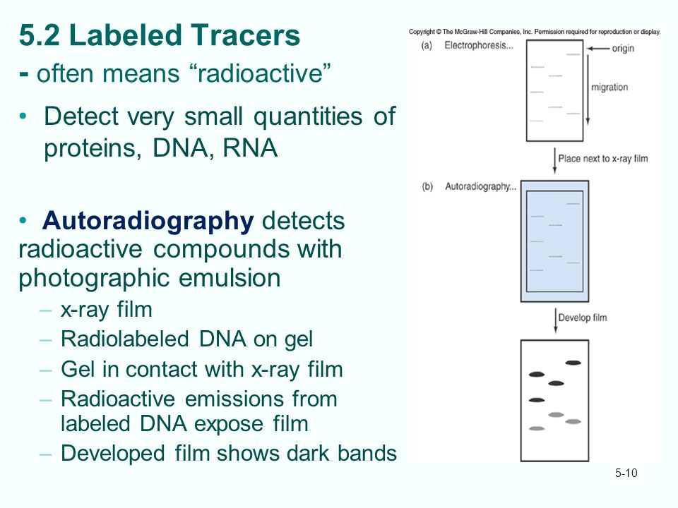 5-10 5.2 Labeled Tracers - often means radioactive Detect very small quantities of proteins, DNA, RNA Autoradiography detects radioactive compounds with photographic emulsion –x-ray film –Radiolabeled DNA on gel –Gel in contact with x-ray film –Radioactive emissions from labeled DNA expose film –Developed film shows dark bands