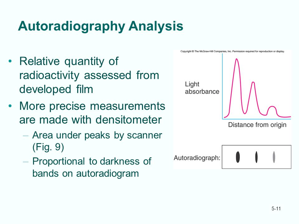 5-11 Autoradiography Analysis Relative quantity of radioactivity assessed from developed film More precise measurements are made with densitometer –Area under peaks by scanner (Fig.