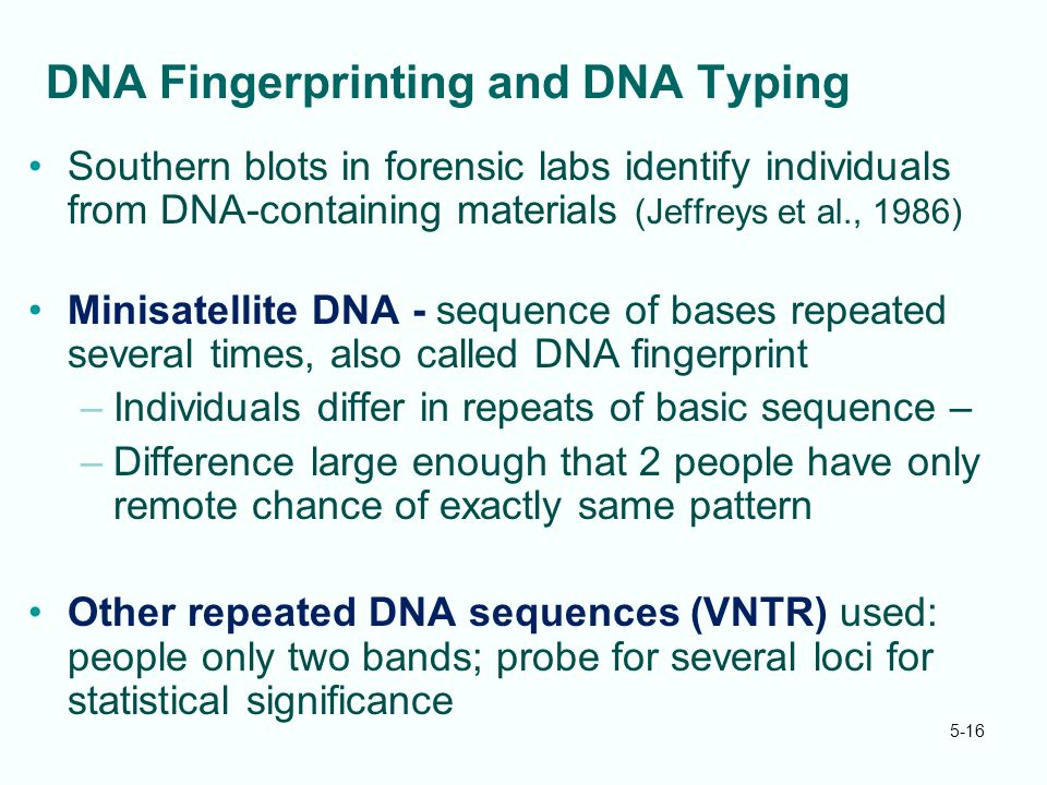 5-16 DNA Fingerprinting and DNA Typing Southern blots in forensic labs identify individuals from DNA-containing materials (Jeffreys et al., 1986) Minisatellite DNA - sequence of bases repeated several times, also called DNA fingerprint –Individuals differ in repeats of basic sequence – –Difference large enough that 2 people have only remote chance of exactly same pattern Other repeated DNA sequences (VNTR) used: people only two bands; probe for several loci for statistical significance