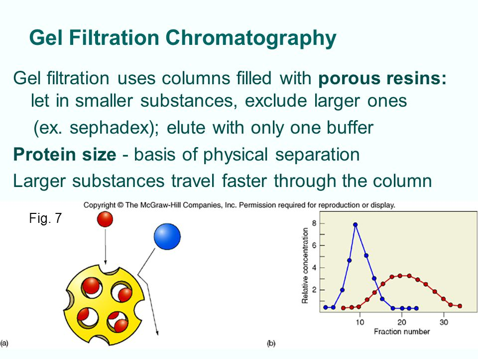 5-8 Gel Filtration Chromatography Gel filtration uses columns filled with porous resins: let in smaller substances, exclude larger ones (ex. sephadex)
