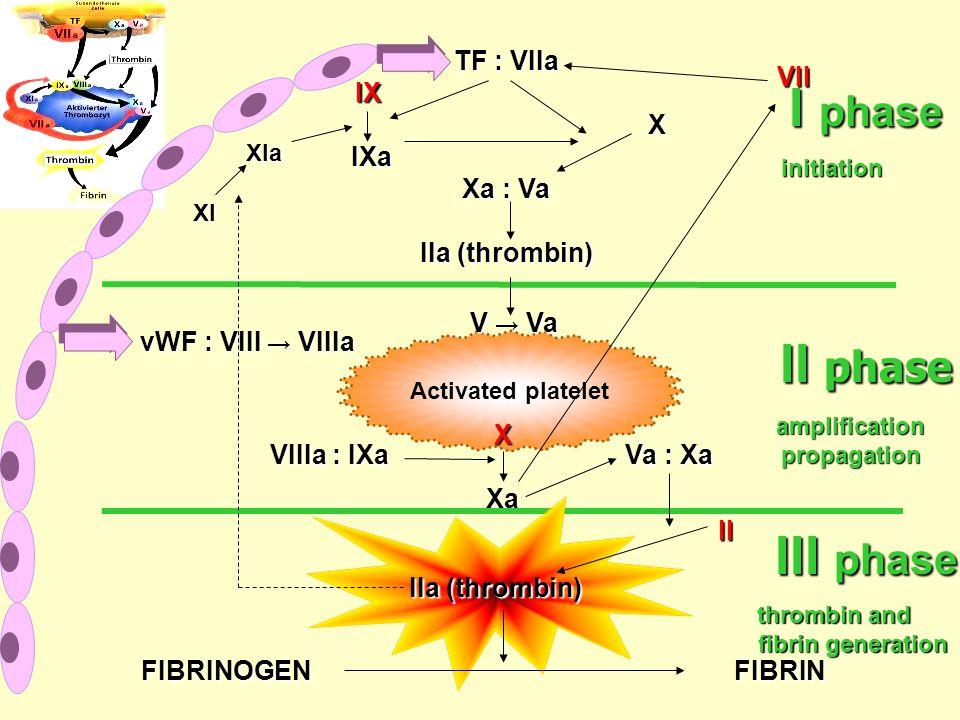 TF : VIIa IX IX XIXa Xa : Va IIa (thrombin) Activated platelet vWF : VIII → VIIIa V → Va X XXXаXаXXXаXа VIIIa : IXa Va : Xa II IIa (thrombin) FIBRINOGEN FIBRIN I phase II phase III phase VII XI XIa initiation amplificationpropagation thrombin and fibrin generation fibrin generation