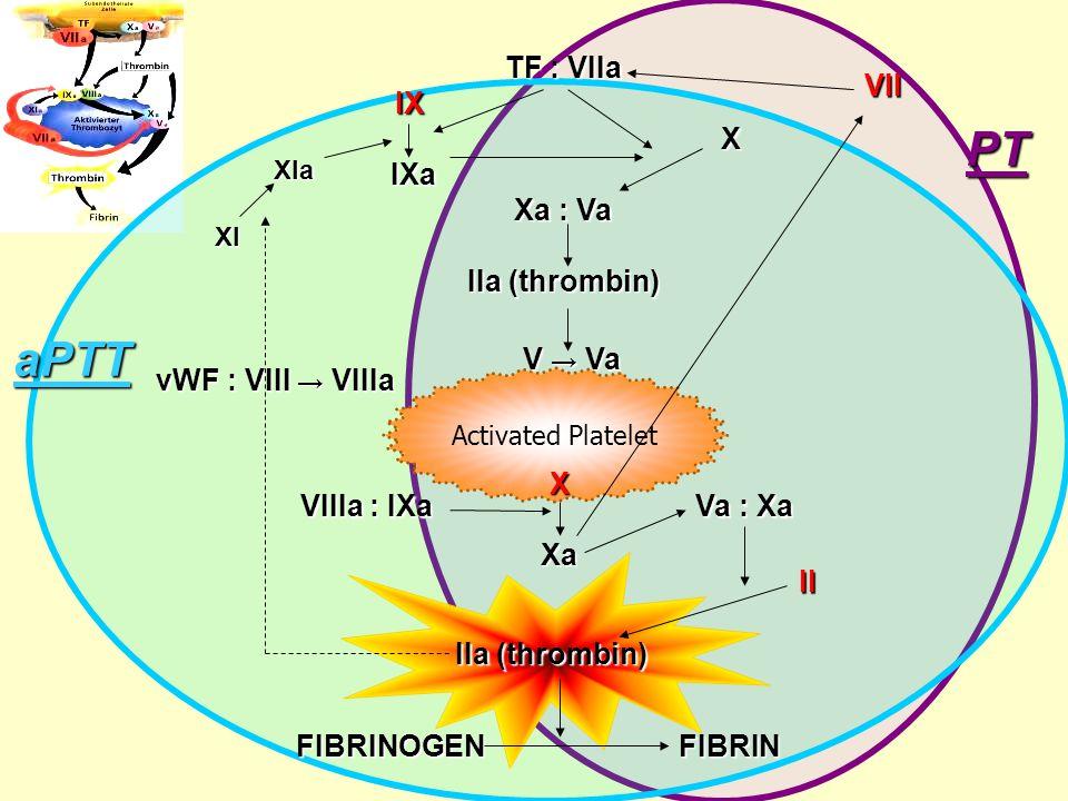 TF : VIIa IX IX XIXa Xa : Va IIa (thrombin) Activated Platelet vWF : VIII → VIIIa V → Va X XXXаXаXXXаXа VIIIa : IXa Va : Xa II IIa (thrombin) FIBRINOGEN FIBRIN VII XI XIa aPTT PT