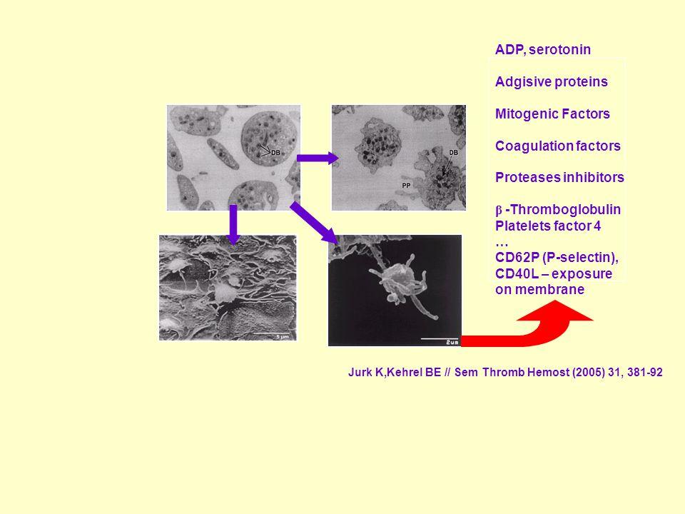 ADP, serotonin Adgisive proteins Mitogenic Factors Coagulation factors Proteases inhibitors β -Thromboglobulin Platelets factor 4 … CD62P (P-selectin), CD40L – exposure on membrane Jurk K,Kehrel BE // Sem Thromb Hemost (2005) 31, 381-92