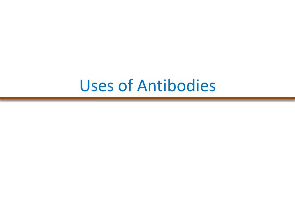 Uses of Antibodies
