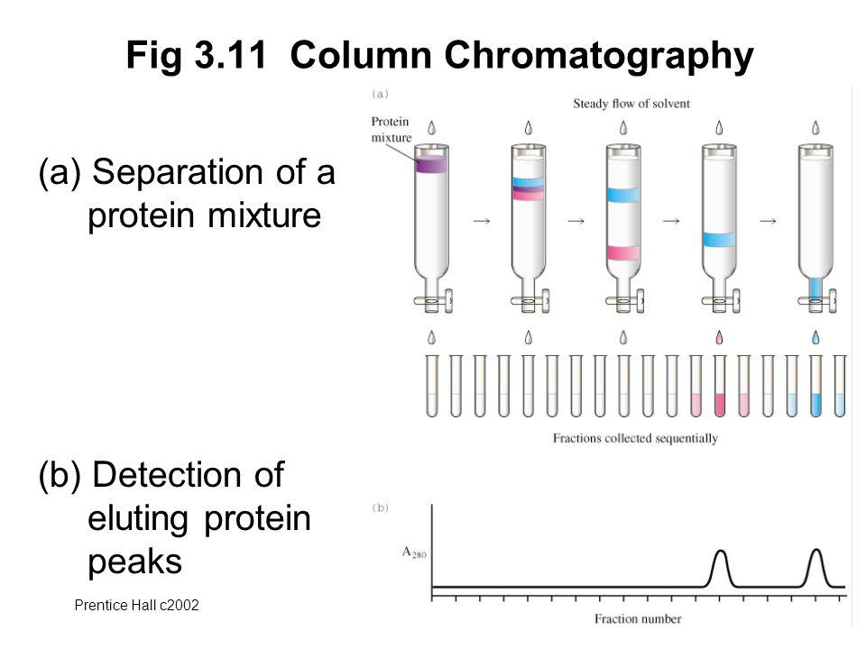 Prentice Hall c2002Chapter 346 Fig 3.11 Column Chromatography (a) Separation of a protein mixture (b) Detection of eluting protein peaks