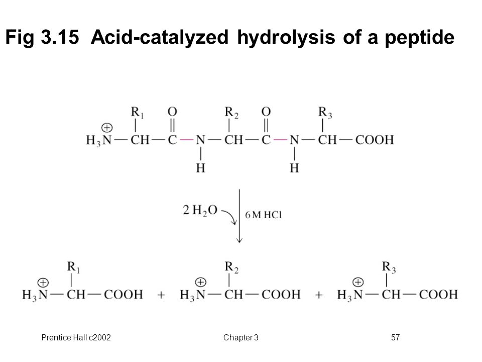 Prentice Hall c2002Chapter 357 Fig 3.15 Acid-catalyzed hydrolysis of a peptide