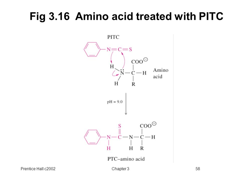 Prentice Hall c2002Chapter 358 Fig 3.16 Amino acid treated with PITC