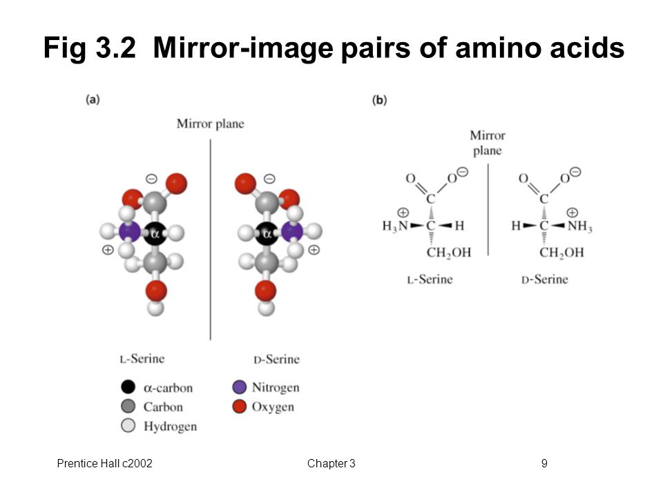 Prentice Hall c2002Chapter 39 Fig 3.2 Mirror-image pairs of amino acids