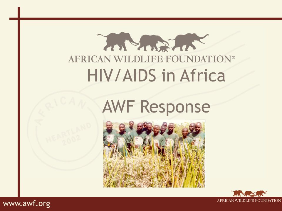 www.awf.org AWF's Response Leadership Workplace Policy Employee benefits Awareness and education Links with partner organizations