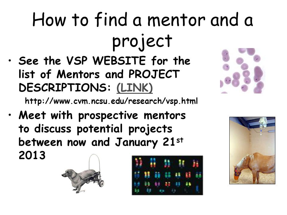 How to find a mentor and a project See the VSP WEBSITE for the list of Mentors and PROJECT DESCRIPTIONS: (LINK)(LINK) http://www.cvm.ncsu.edu/research/vsp.html Meet with prospective mentors to discuss potential projects between now and January 21 st 2013