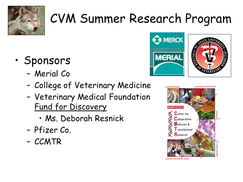 CVM Summer Research Program Sponsors –Merial Co –College of Veterinary Medicine –Veterinary Medical Foundation Fund for Discovery Ms. Deborah Resnick