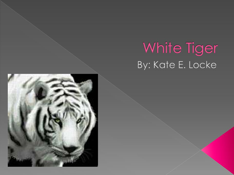  http://www.indiantiger.org/white- tigers/endangered-white-tiger.html http://www.indiantiger.org/white- tigers/endangered-white-tiger.html  http://www.tigerhomes.org/cam/white_t iger.cfm