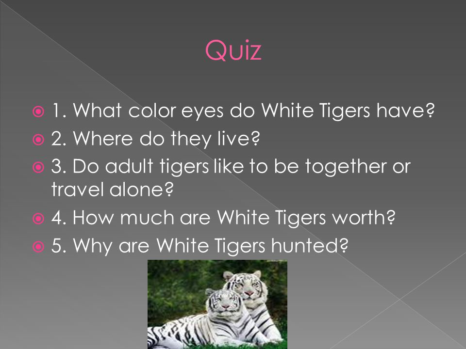  1. What color eyes do White Tigers have.  2. Where do they live.