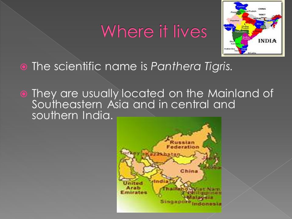  The scientific name is Panthera Tigris.