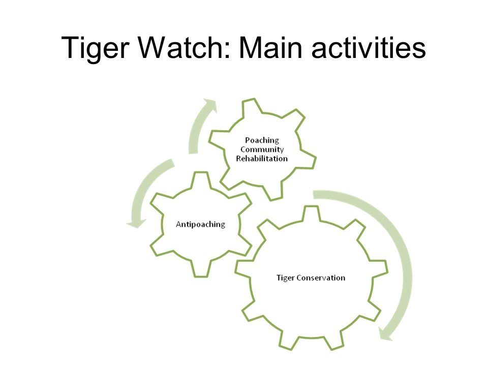 Tiger Watch: Main activities