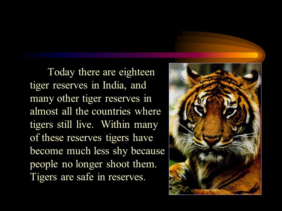 In 1969, many tiger experts went to New Delhi in India to talk about tiger conservation. At the meeting in India, the tiger experts declared the tiger