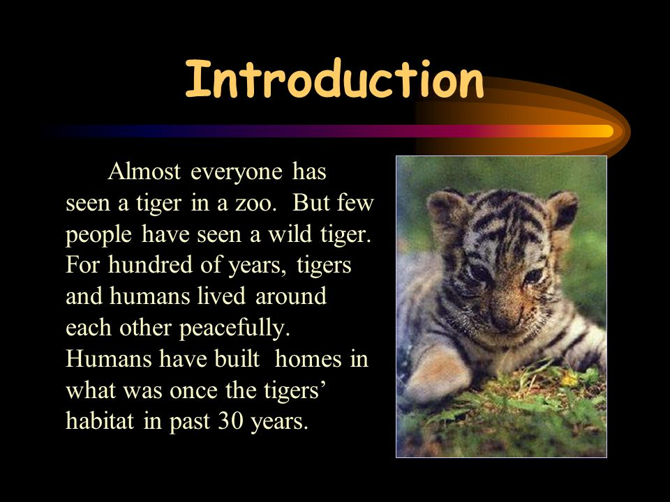 Index Introduction The Tiger Family The Wild Tigers The Tiger Cubs The habitat of tigers Tigers' diet Tiger Attacks Why are tigers endangered? Tigers
