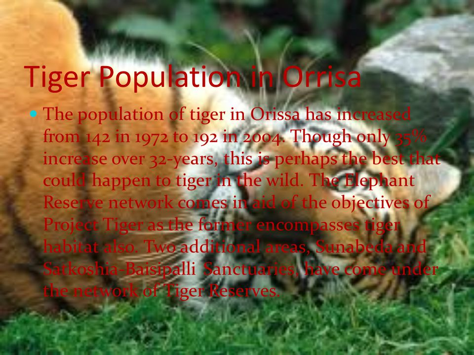 Tiger Population in Orrisa The population of tiger in Orissa has increased from 142 in 1972 to 192 in 2004.