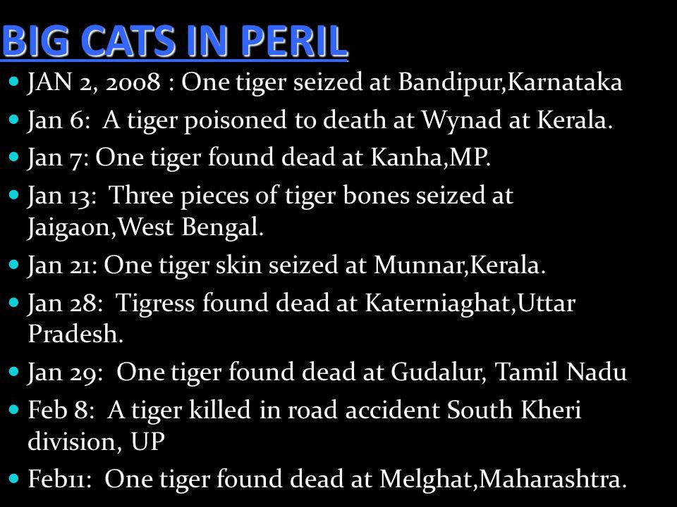 BIG CATS IN PERIL JAN 2, 2008 : One tiger seized at Bandipur,Karnataka Jan 6: A tiger poisoned to death at Wynad at Kerala. Jan 7: One tiger found dea