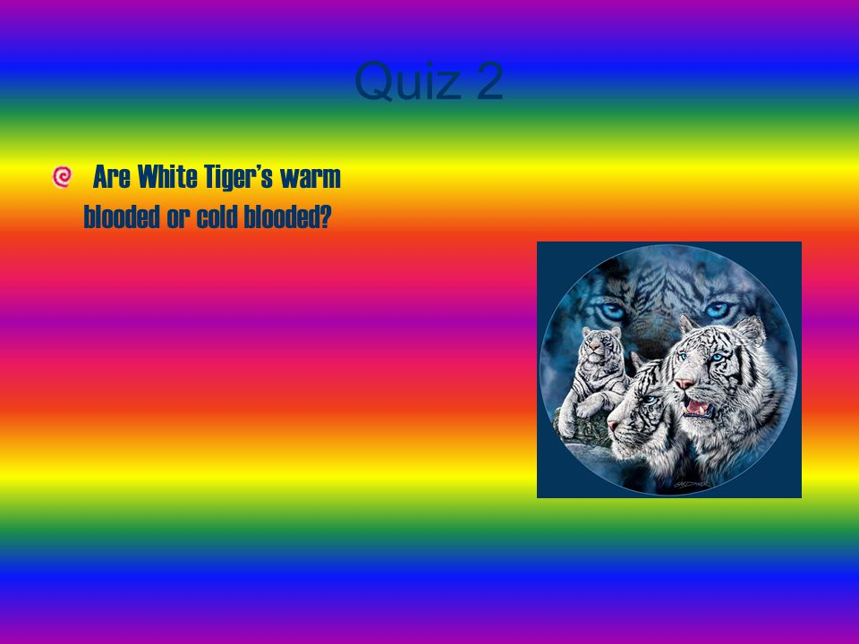 Quiz 2 Are White Tiger's warm blooded or cold blooded?