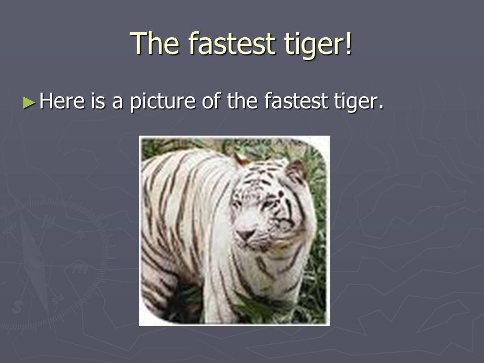 The fastest tiger! ► Here is a picture of the fastest tiger.